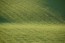 Free Fresh Green Farm Field Stock Image - 4298251