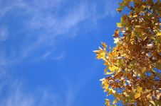 Free Autumn Colours Royalty Free Stock Photography - 4298507