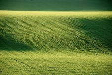 Free Green Grass Field Royalty Free Stock Photo - 4298825