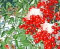 Free Berries On Ice Royalty Free Stock Image - 430396