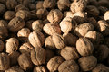 Free Walnuts Stock Photo - 436090