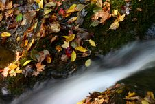Free Water And Colored Leaves Stock Images - 432404
