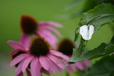 Free Butterfly On Leaf Stock Photography - 432412