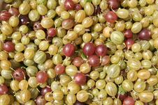 Free Gooseberries Royalty Free Stock Image - 432446