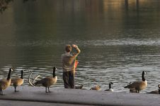 Free Child & Geese Stock Photography - 433372