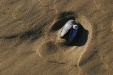 Free Mussel Shell Royalty Free Stock Image - 435496