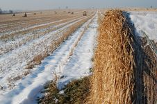 Free Winter Landscape With Bundles Royalty Free Stock Image - 437936