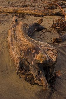 Free Driftwood Stock Photo - 439380