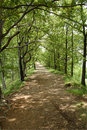 Free Path In The Forest Stock Photo - 4304640