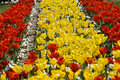 Free Yellow And Red Tulips Royalty Free Stock Photos - 4308918