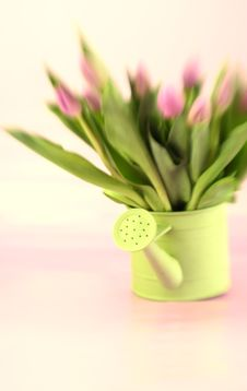 Free Tulips With Color Tint Royalty Free Stock Images - 4300249