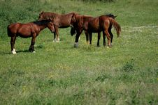 Free Four Wild Horses Stock Images - 4300544