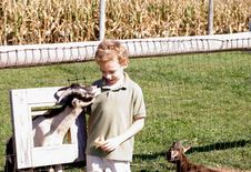 Boy And Goat Looking At Each Other Stock Photo