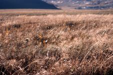Free Grassland Stock Photography - 4301742