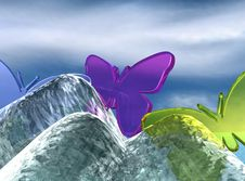 Presentation Butterfly Royalty Free Stock Image