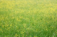 Free Meadow Royalty Free Stock Images - 4304969