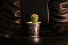 Free Cactus Royalty Free Stock Photo - 4306715