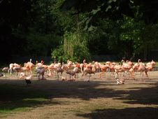 Free Flamingos In A Zoo Stock Image - 4308111