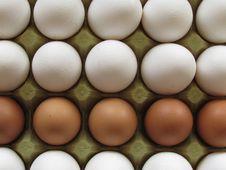 Free Eggs Stock Photography - 43000482