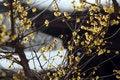 Free Plum Blossom Stock Images - 4312494