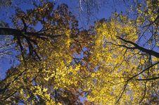 Free Trees View Upwards Stock Photo - 4310060