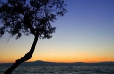 Tree Silhouette Against Sunset Stock Photos