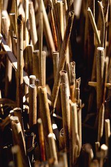 Free Reeds Stock Image - 4310881