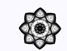 Black Star Flower Stock Images