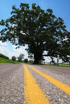 Tree By Road 02. Stock Images