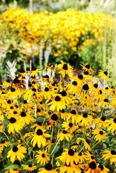 Free Yellow Flower Garden. Royalty Free Stock Photo - 4311405