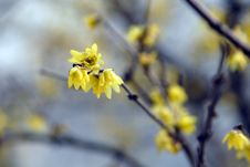 Free Plum Blossom Stock Photos - 4312313