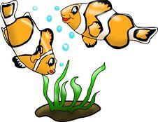 Fish Nemo Stock Photos