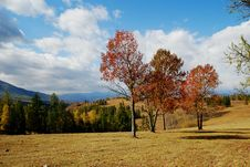 Free Red Trees Under Blue Sky Stock Photography - 4314242