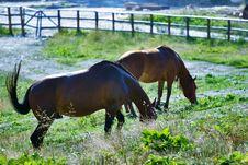 Free Horses Grazing Stock Image - 4314821