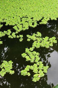 Free Water Garden Stock Photos - 4315433