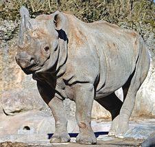 Free Rhinoceros 12 Royalty Free Stock Image - 4315956