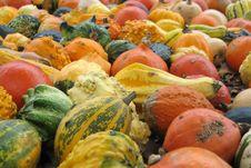 Free Pumpkins Stock Image - 4316111