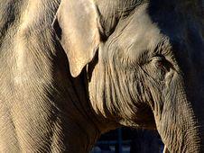 Free Elephant Stock Photography - 4316392