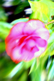 Free Exotic Flower Stock Photography - 4316532
