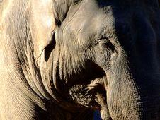Free Elephant Stock Photo - 4316600