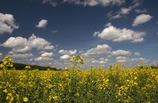 Free Yellow Field And The Blue Sky Stock Photography - 4318982