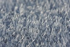 Morning Frost Crystals Stock Photography