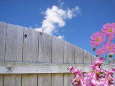 Free Summer Hues Stock Image - 4319961