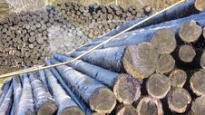 Free Timber Royalty Free Stock Photo - 4321575