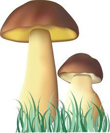 Free Mushroom Stock Photography - 4323032