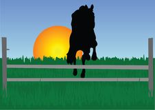 Free Horseman Royalty Free Stock Photos - 4324238