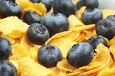 Free Blueberries Royalty Free Stock Photography - 4325127