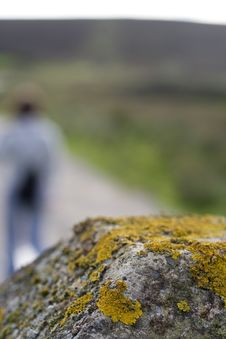 Lichen With Figure In Background Stock Photos