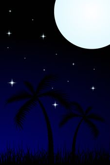 Free Tropical Night Stock Images - 4325934