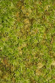 Free Moss Background Stock Image - 4325951